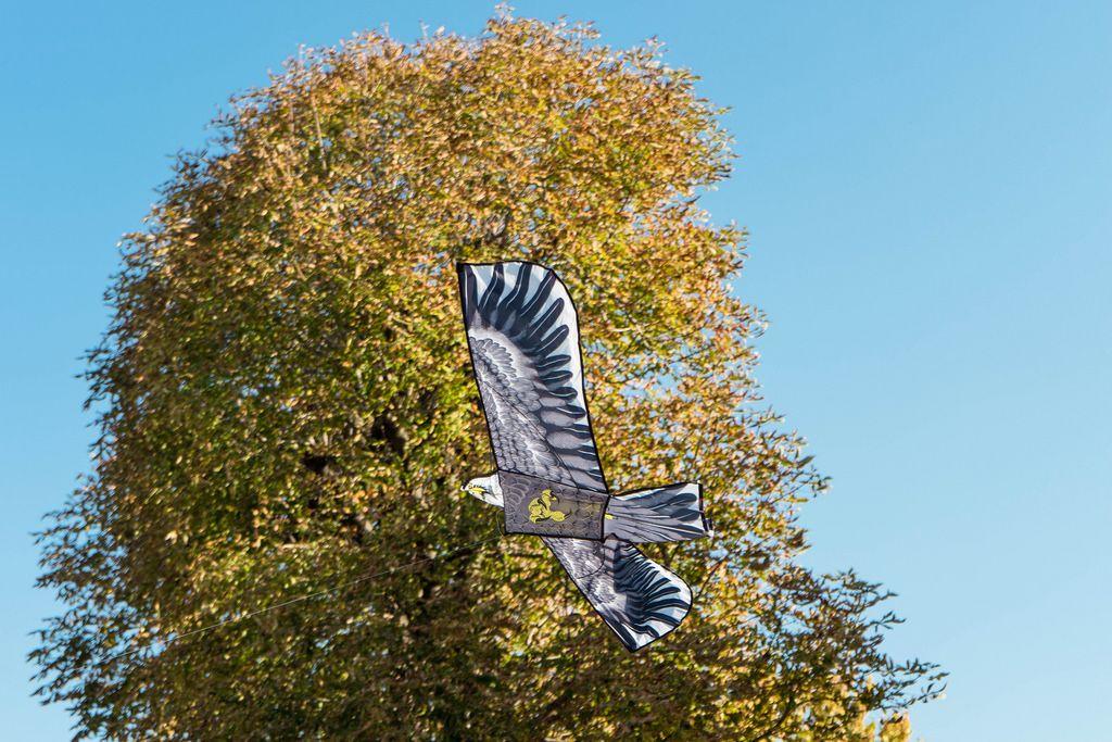Untersicht eines Adler Drachen vor Herbstbaum