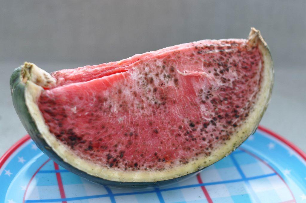 Verschimmelte Wassermelonenscheibe