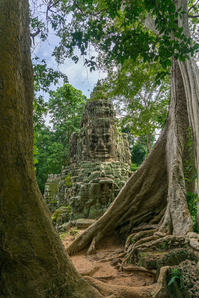 Victory Gate Face between two Trees in Siem Reap