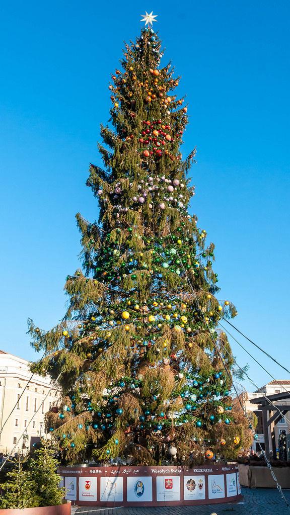 Weihnachtsbaum auf dem Petersplatz