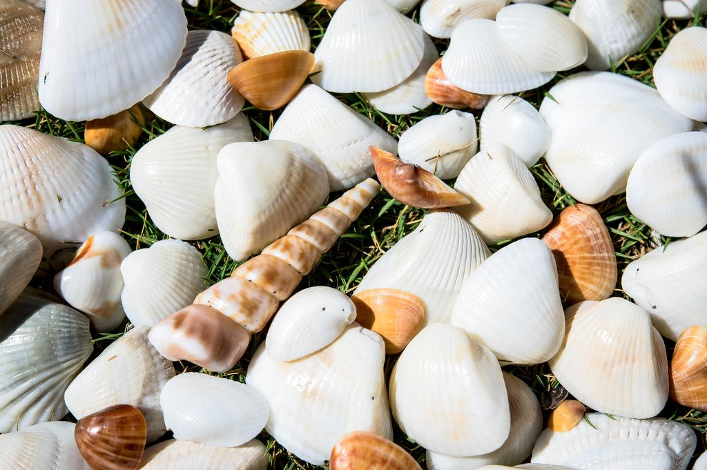White and orange sea shells on grass