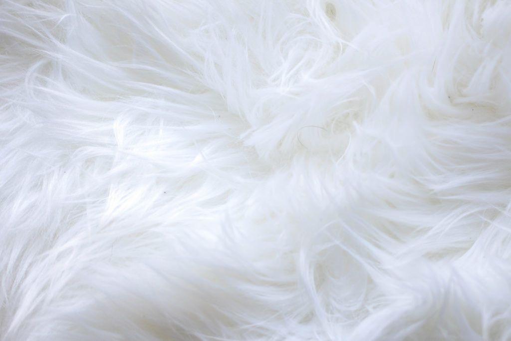 White short fur background bilder und fotos creative for Fein wohnzimmer bilder fur hintergrund