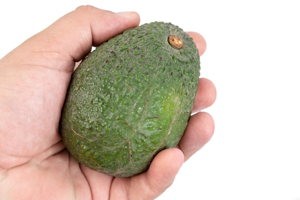 Whole fresh Avocado in the hand