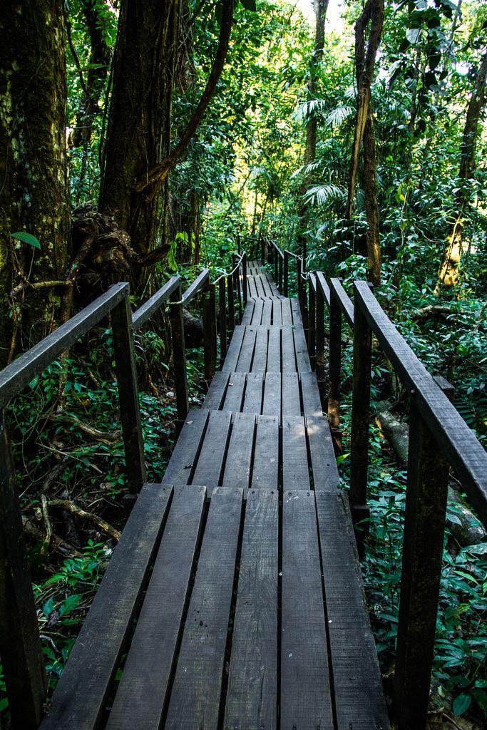 Wooden Trail Surrounded by Trees (Flip 2019) (Flip 2019) Flip 2019
