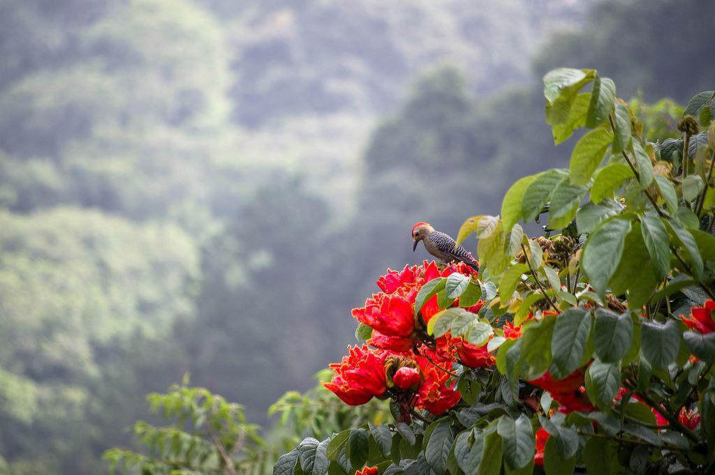 Woodpecker in the flowers