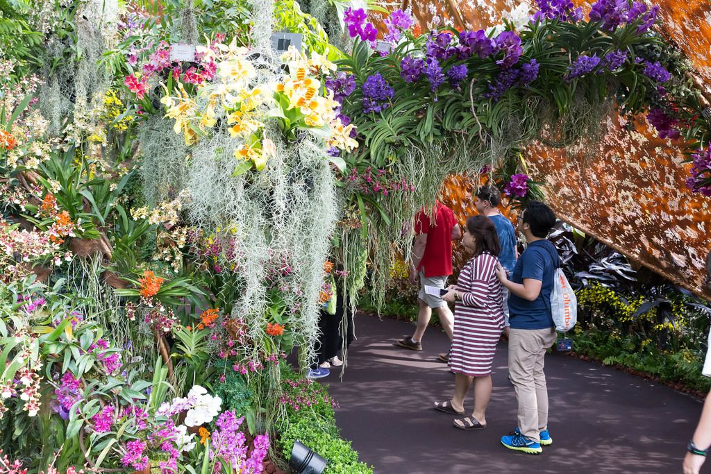 Wunderschöner Blumengarten in Singapur