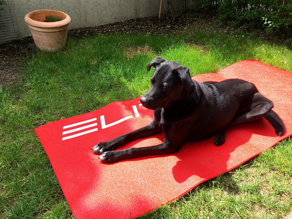 Yoga-Übung: Hund