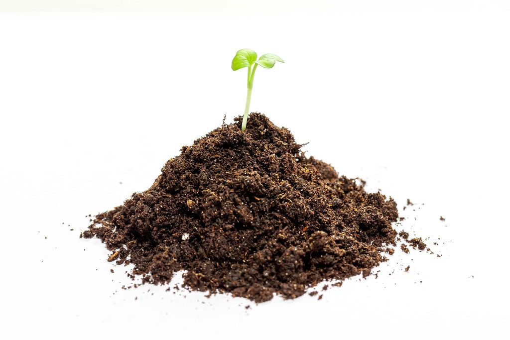 Young green seedling growing in a soil