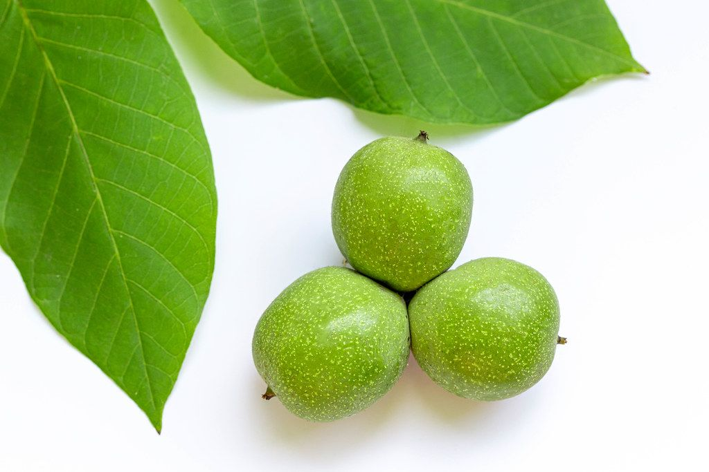 Young green walnut with leaves on white background