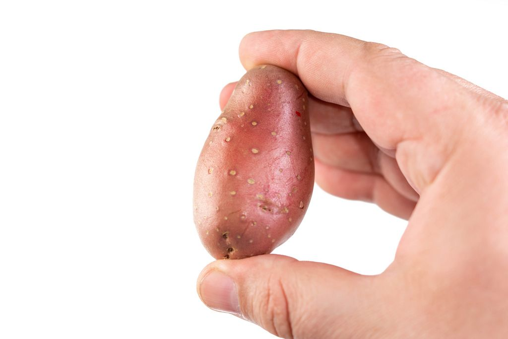 Young Potatoe in the hand isolated on white background (Flip 2019)