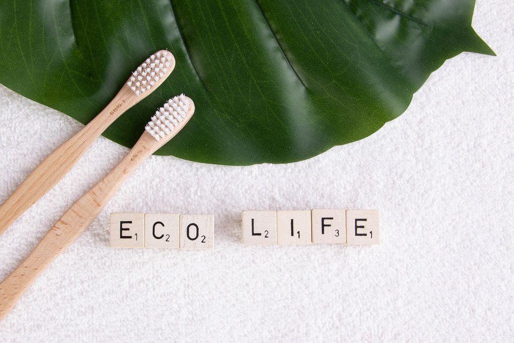 Zwei Bambus-Zahnbürsten auf einem Tropenblatt, neben dem Text