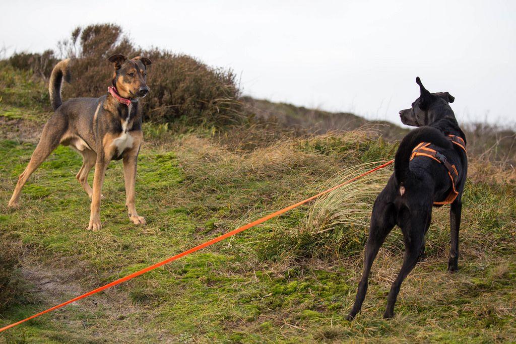 Zwei Hunde schauen sich gegenseitig an