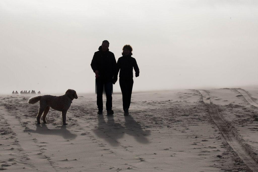 Zwei Menschen beim Spaziergang mit ihrem Hund