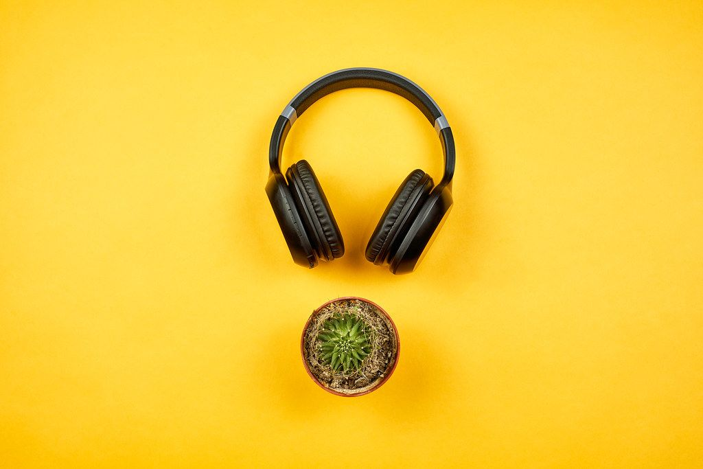 A headphone and cactus plant on yellow background