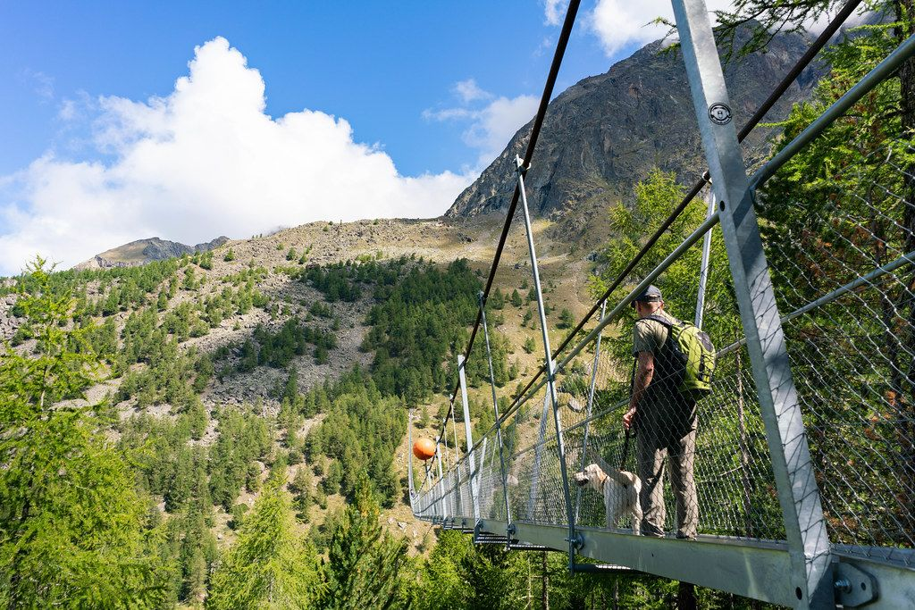 A man with a dog starting to cross 500 meters long pedestrian suspension bridge