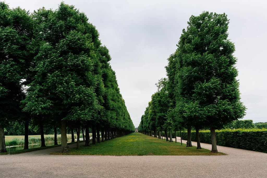 Alley of trees going up until horizon in Hannover Herrenhausen Gardens