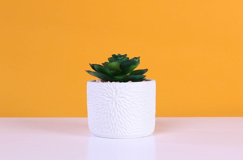 Aloe flower on orange background
