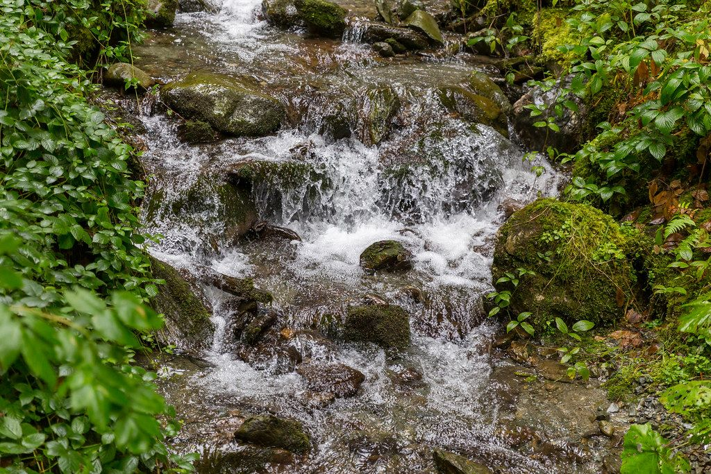 An Alpine stream flows between rocks and green plants in Alpbach, Tyrol, Austria
