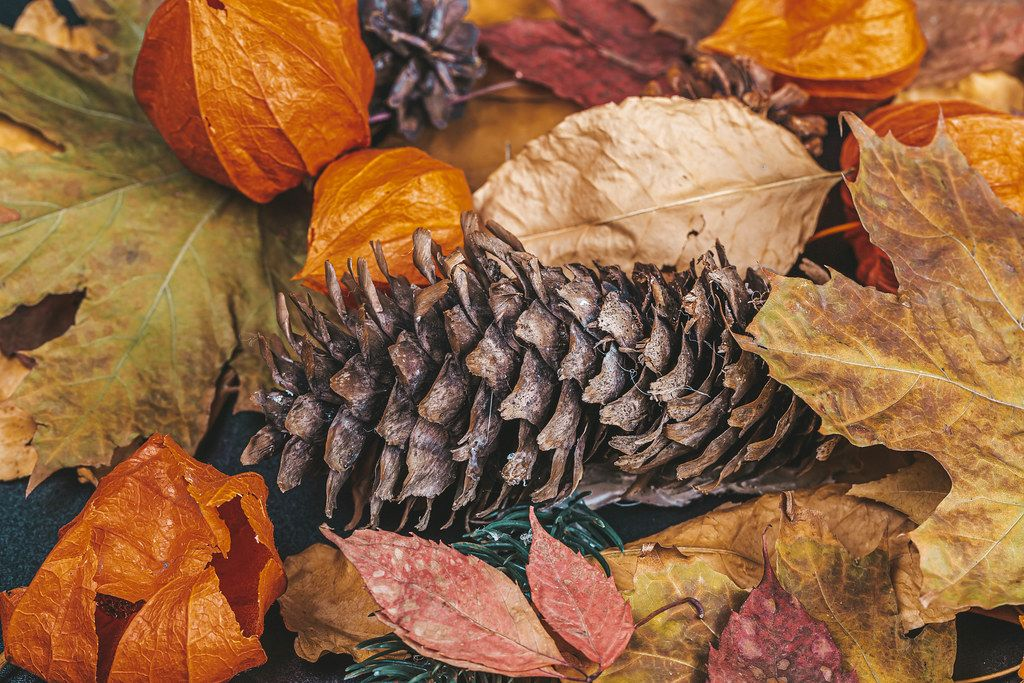 Autumn background with dry leaves, physalis and cones