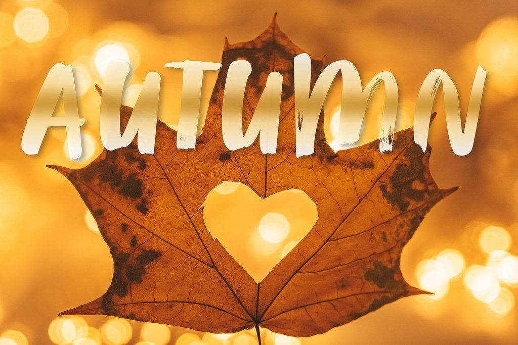 Autumn background with yellow leaf and golden bokeh