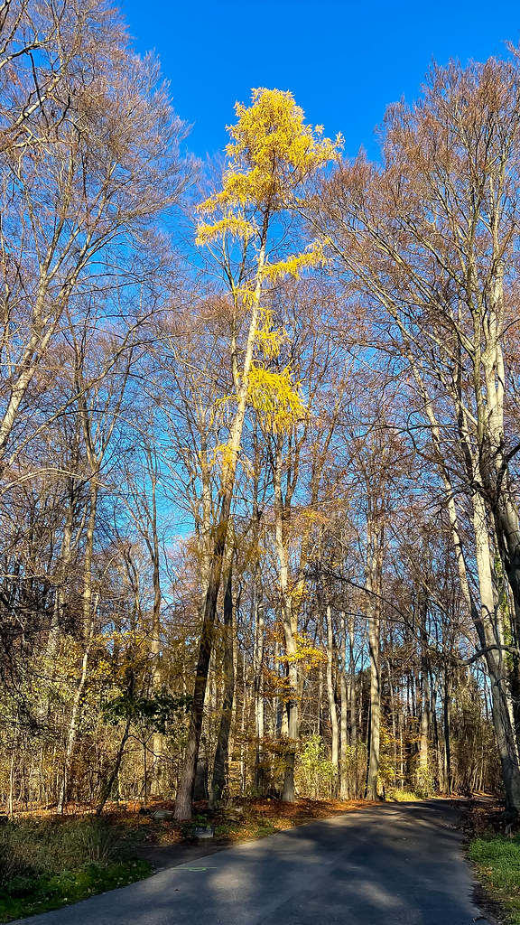 Bäume im Kölner Stadtwald an einem sonnigen Tag mit blauem Himmel im Dezember