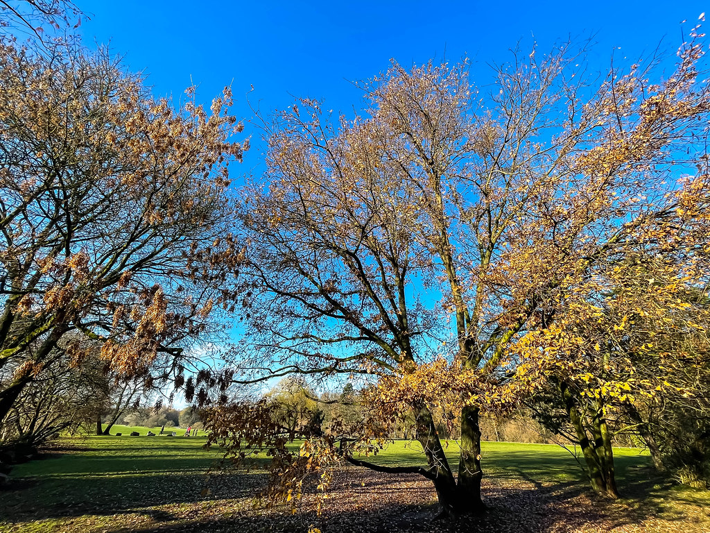 Beautiful sunny day with blue sky in December. Trees with partially bare branches in a park in Cologne