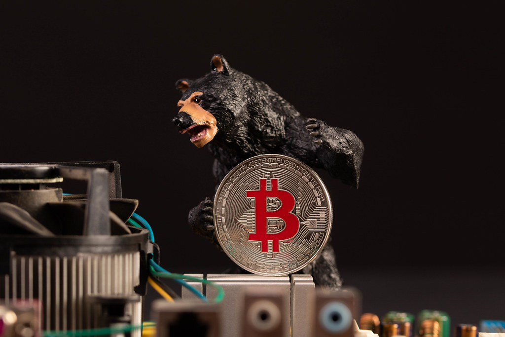 Black bear holding silver Bitcoin coin with computer parts