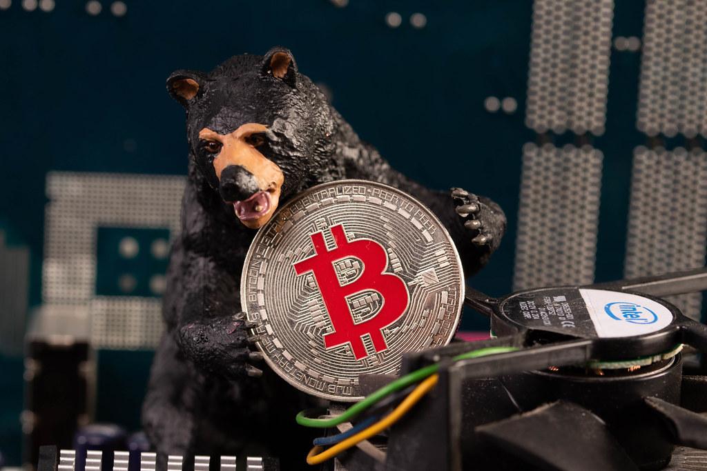 Black bear holding silver Bitcoin coin