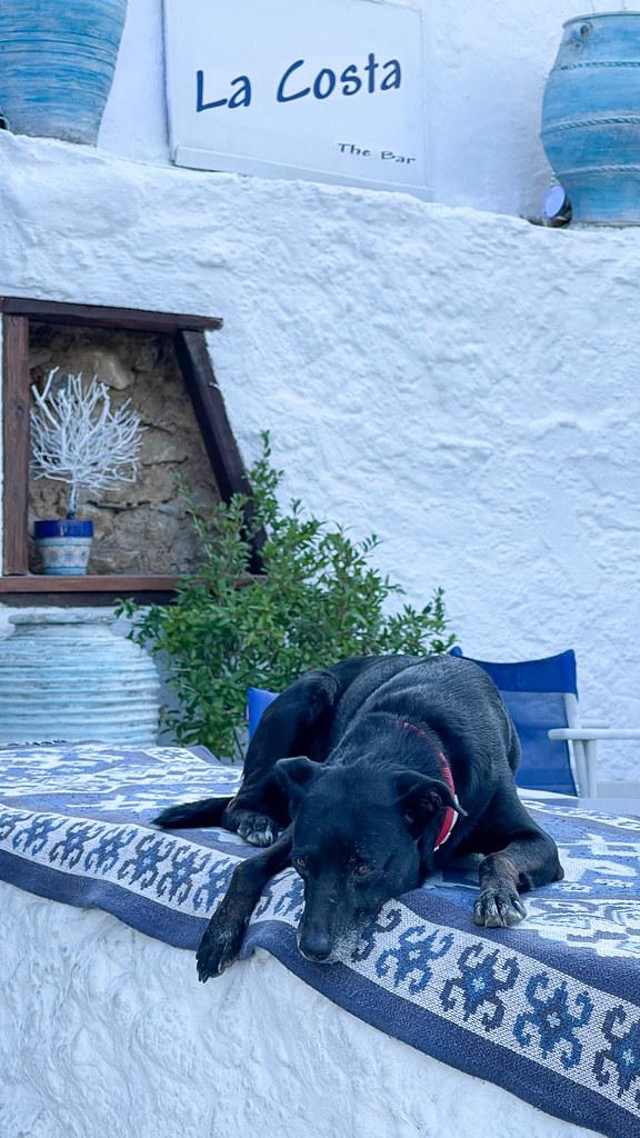 Black dog resting on traditional Greek textiles at La Costa bar in Skopelos, Greece