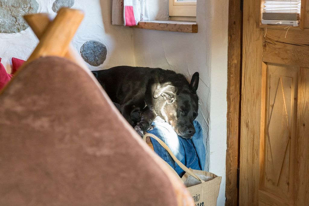 Black dog takes a nap, half in the sunlight, half in the shade, on a pair of jeans by a wooden door