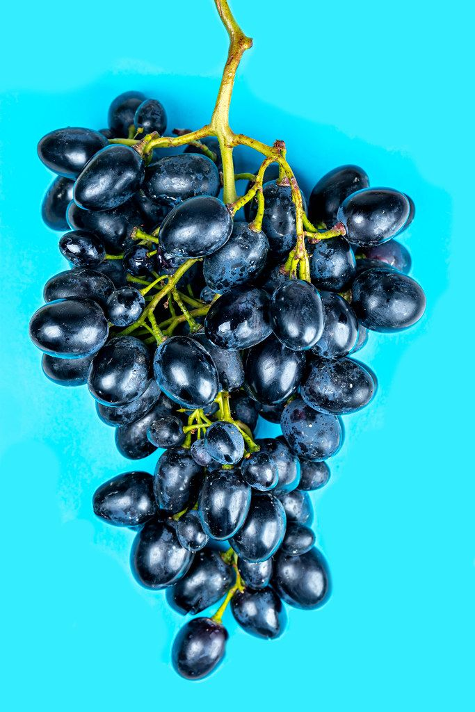 Blue grapes on a blue background