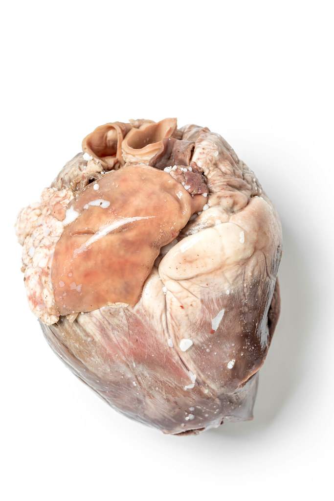 Boiled pork heart on a white background