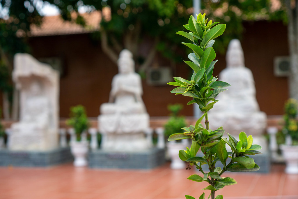 Bokeh Photo of Green Leaves of a Plant with Buddha Statues in the Background at Truc Lam Phuong Nam Zen Monastery in Can Tho, Vietnam