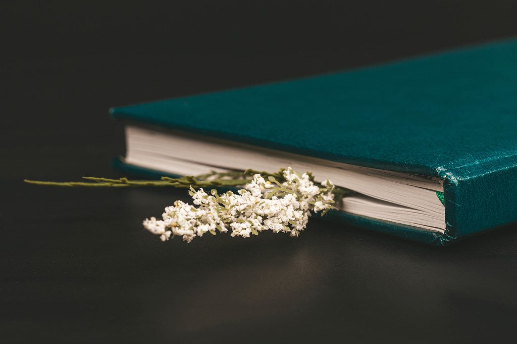 Book on a black background with a dry white flower