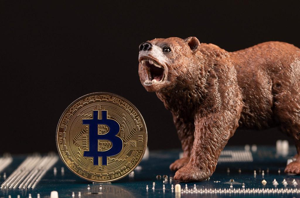 Brown bear with Bitcoin coin