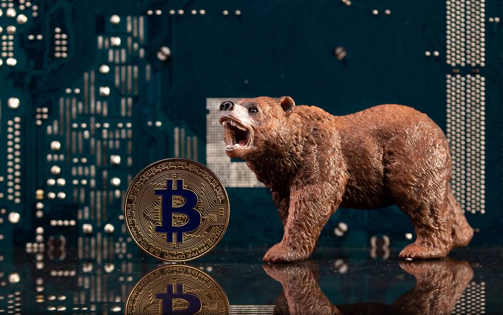 Brown bear with golden Bitcoin coin