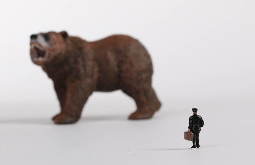 Brown bear with man with suitcase