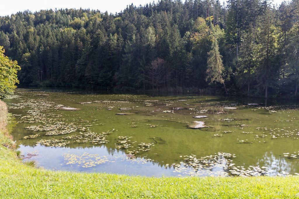 Buchsee (Tirol): kleiner See wo sich Seerosen auf der Wasseroberfläche wiederfinden