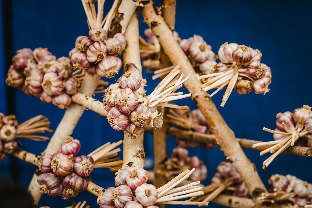 Bunch Of Garlic On The Wood With Blue Background