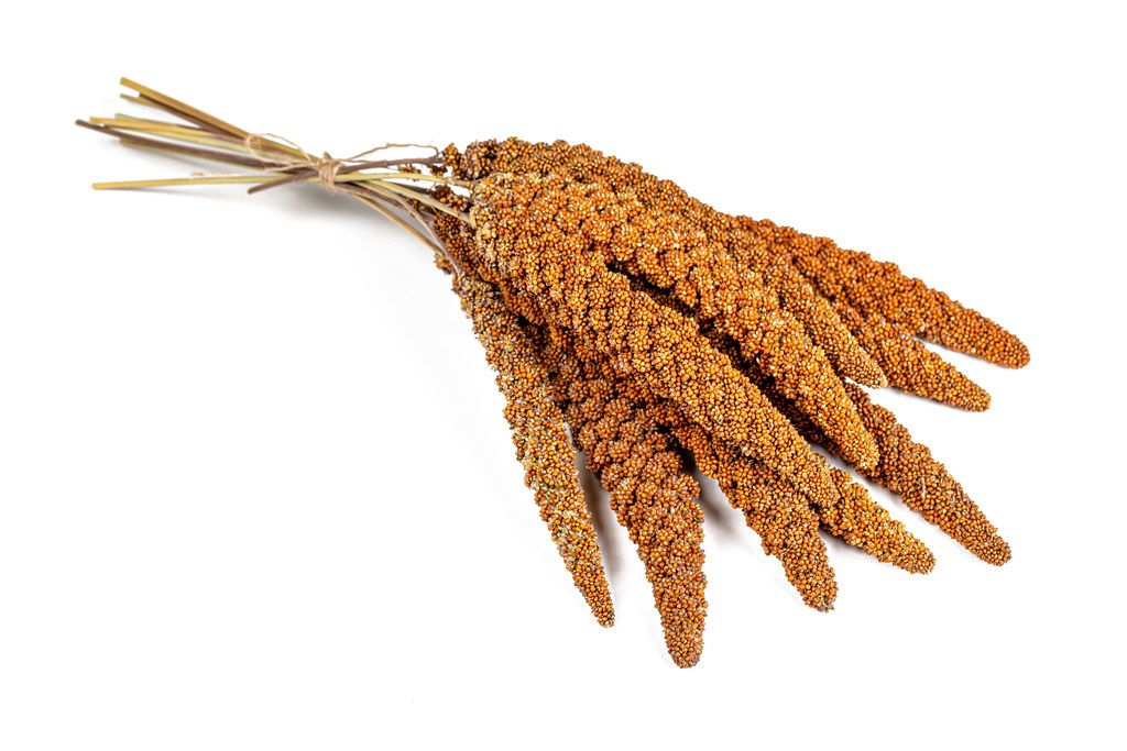 Bunch twig red millet seed on white