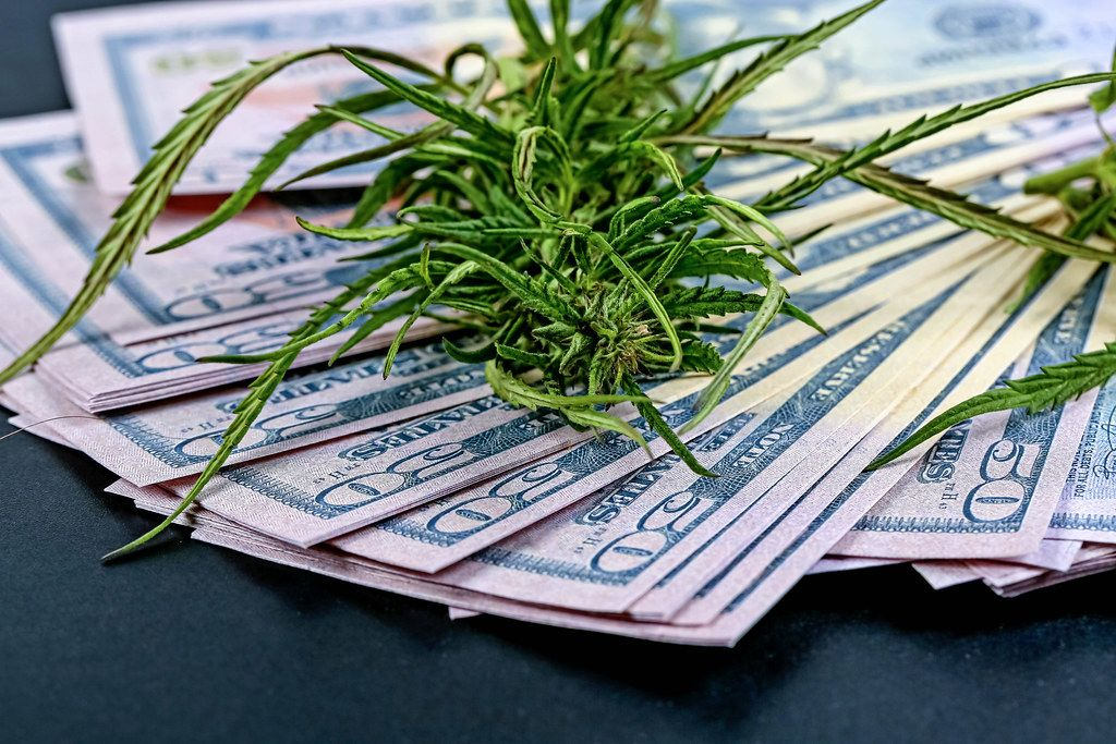Cannabis grass on a pile of dollars