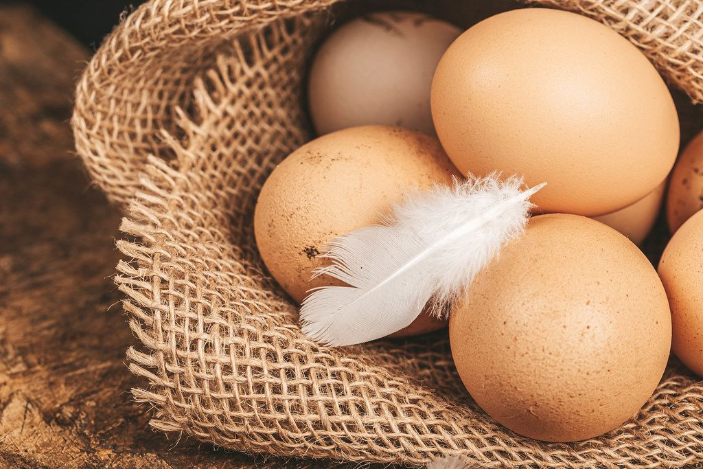 Chicken eggs on burlap with white feather