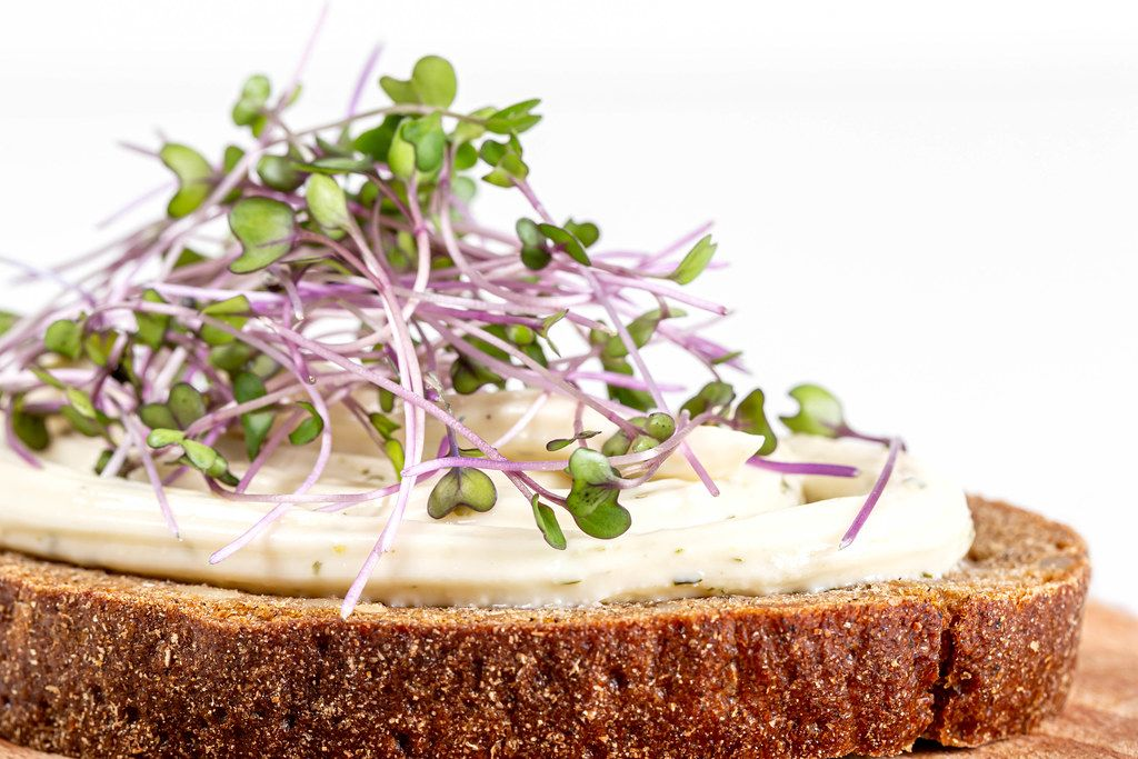 Close-up, a sandwich with brown bread, cheese and micro-greens of cabbage