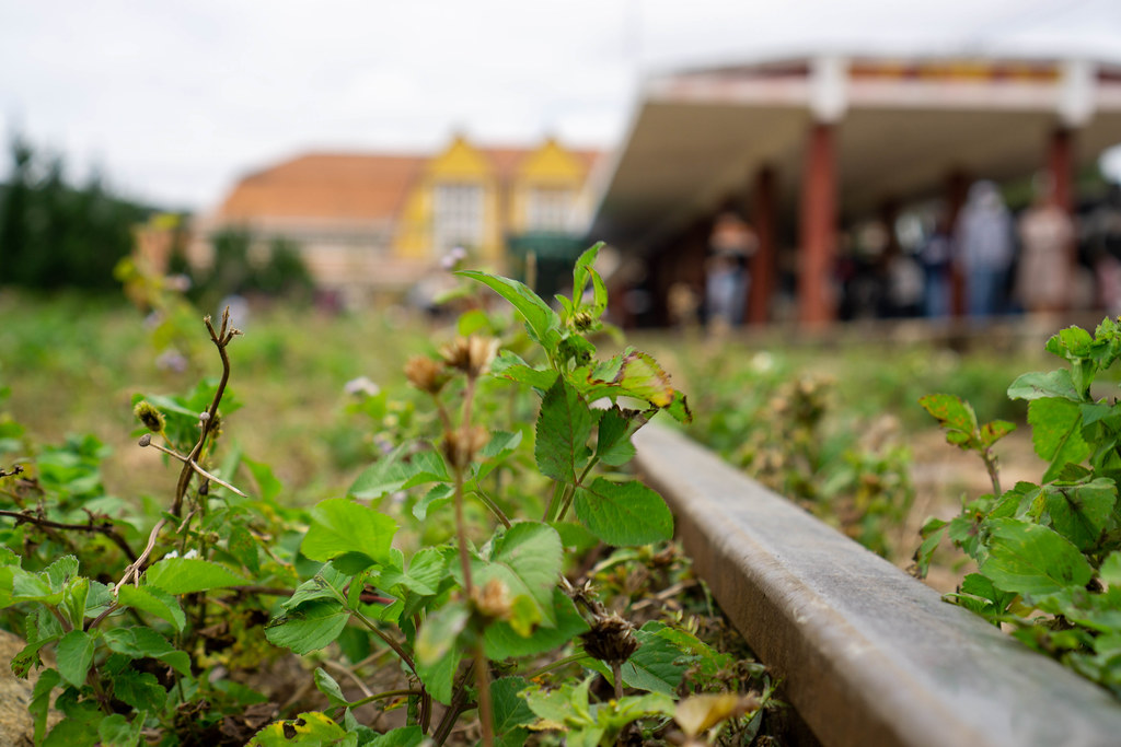 Close Up Bokeh Photo of Plants and a Rail Track with the Dalat Railway Station in the Background in Da Lat, Vietnam