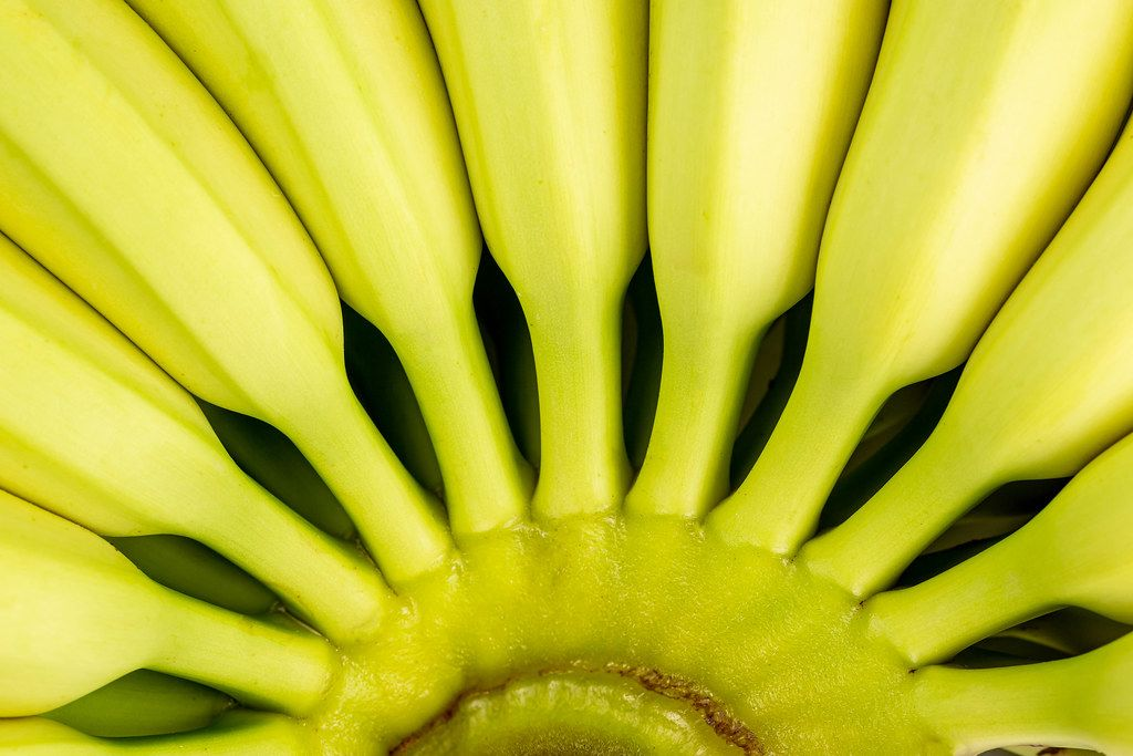 Close-up, branch of fresh bananas