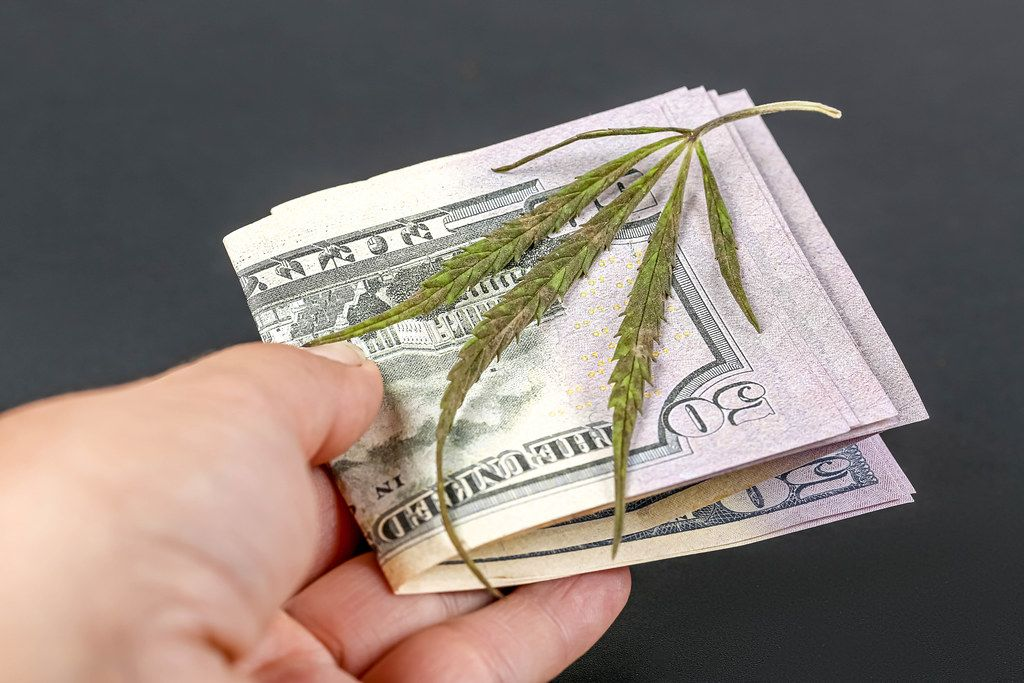 Close-up, dollars and a green cannabis leaf in a woman