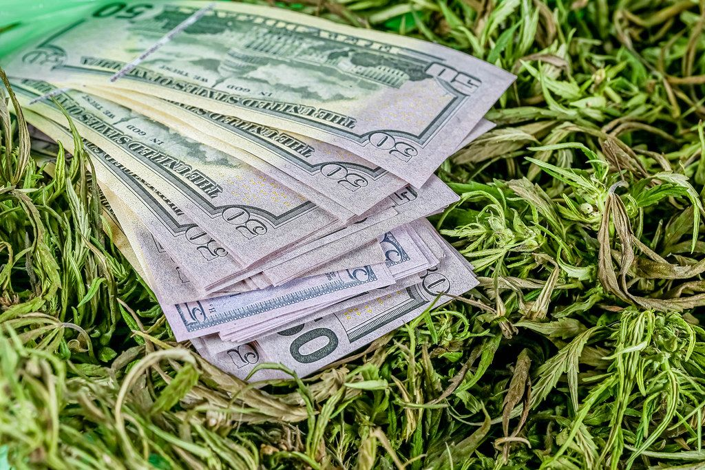Close-up, dollars on fresh hemp grass. Illegal distribution concept