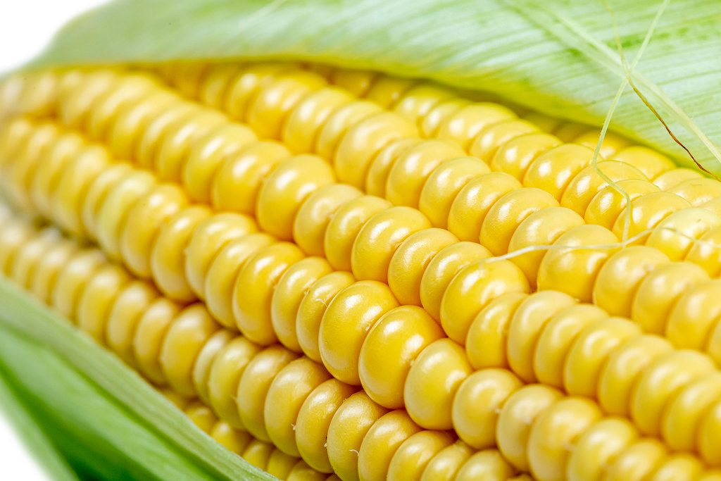 Close-up, fresh raw sweet corn