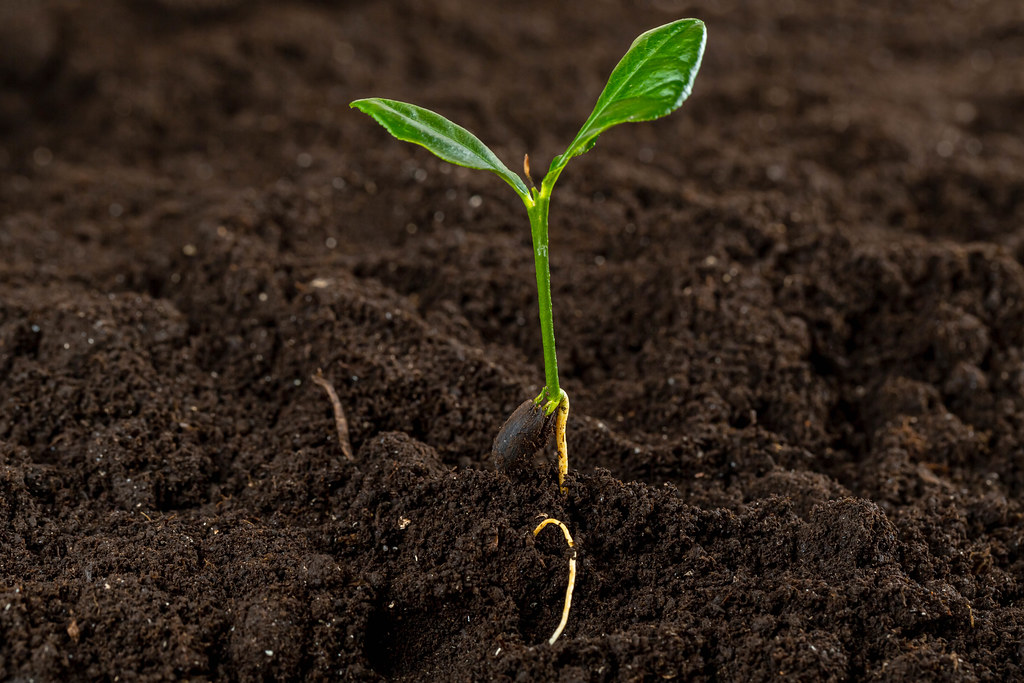 Close-up of a small tree growing in the soil, the concept of a new life