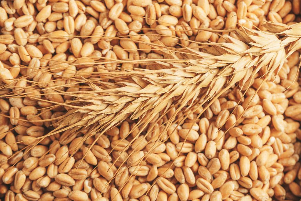 Close-up, spike of wheat on the background of wheat grains